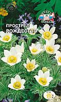 Семена Сон трава (Прострел обыкновенный) Рождество 0,1 грамма Седек