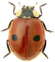 Биозащита насекомыми