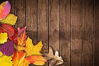 Фотофон виниловый, осень