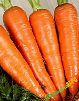 Семена моркови Наполи F1, 25000 семян, Bejo (Бейо),Голландия