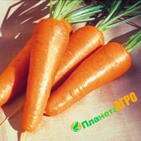 Семена моркови Ред Коред, 500 г, Vilmorin, (Вилморин), Франция
