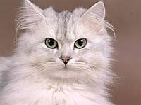 Урологический синдром кошек