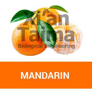 """Xi'an Taima""""Mandarin"""""""