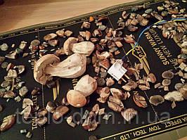 Инфракрасная сушилка для грибов. фруктов .трав