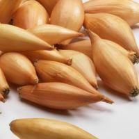 Лук репчатый-севок сорт Бамбергер средне-ранний для осеннего и весеннего посева  желтого цвета