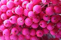 Сахарные ягодки 400 шт/уп.оптом неоново-розового цвета (калина в сахаре)