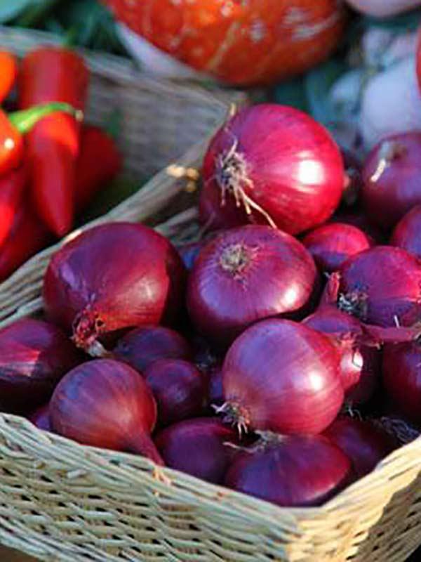 Лук севок озимый красный, круглый  Ред Барон Голландия