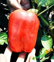 Семена перца Никита F1, 500 с, Clause (Клоз), Франция