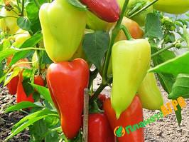 Насіння перцю Айвенго, 10000 насіння, Nasko (Наско), Молдавія