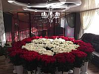 2501 роза