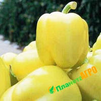 Насіння перцю Аден F1, насіння 250, Nasko (Наско) ,Молдавія