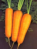Морква сорт Яскрава