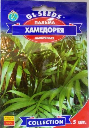 Пальма Хамедорея 5н (GL seeds)