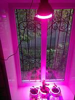 Led фитолампы и светильники для растений