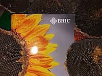 Семена подсолнечника КАРЛОС 115 под Евролайтинг,  A B C D E, 115 дней, Стандарт