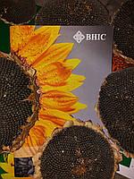Семена подсолнечника КАРЛОС 115 под Евролайтнинг,  A B C D E, 115 дней., Экстра. ВНИС