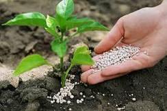 Удобрение и стимуляторы роста растений