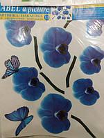 Орхидеи синие