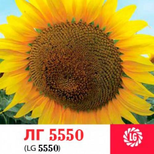 Семена подсолнечника Лимагрейн ЛГ 5550 Limagrain