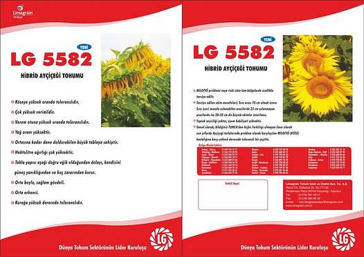 Гибрид подсолнечника Лимагрейн ЛГ 5582