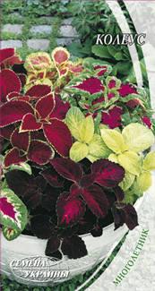 Насіння Квіти Колеус 0,1 г 231400 Насіння України, фото 2