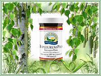 Противовоспалительный фитокомплекс Буплерум Плюс, 100 капсул