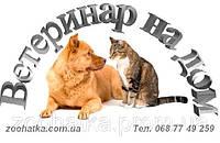Ветеринарный врач (выезд на дом)