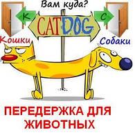 Передержка для собак и кошек, фото 1