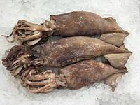 Кальмар тушка  illex argentinus  . Испания