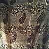 Мебельный велюр ширина ткани 160 см сублимация леопард