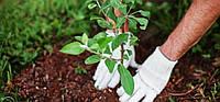 Высадка растений, фото 1