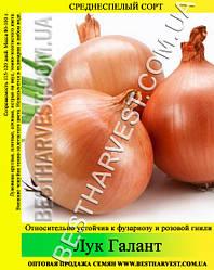 Насіння цибулі «Галант» 0.5 кг