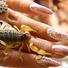 Опасный маникюр из Мексики: дизайн ногтей с живыми скорпионами