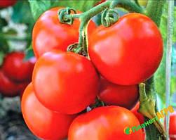 Семена томата детерминантного Ричи F1, 5 гр, Bejo (Бейо), Голландия