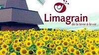 Семена подсолнечника Лимагрейм( Limagrain)