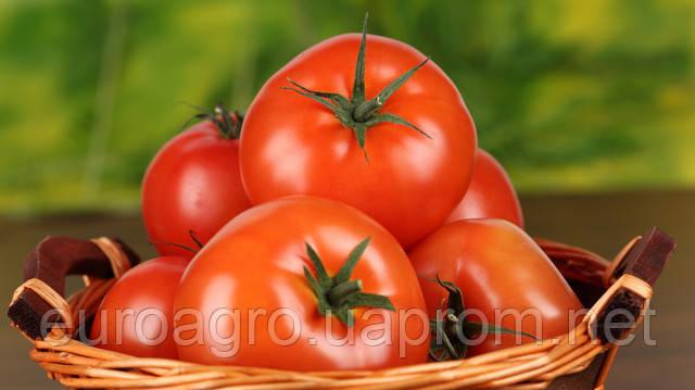 Экспорт томатов принес Украине больше 8,5 млн долларов