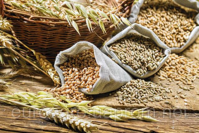 Украинские фермеры намерены собрать рекордный урожай зерна