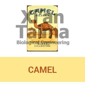 """Xi'an Taima """"Camel"""""""