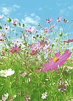 Фотообои на стену Полевые цветы, 183х254 см
