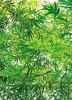 "Фотообои на стену: ""Бамбук"", 4 ч., 183х254"