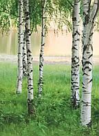 Швейцарские фотообои Северный лес, 183х254 см