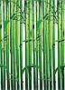 "Фотообои на стену: ""Бамбук"", 4 ч., 183х254 см"