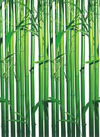 "Фотообои на стену: ""Бамбук"", 4 ч., 183х254 см, фото 1"