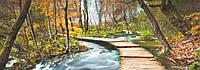 Фотообои на стену Дорога в лесу, 127х366 см