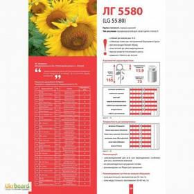 Семена подсолнечника Лимагрейн ЛГ 5580(Limagrain)