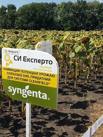 Семена подсолнечника Сингента СИ Эксперто(syngenta)