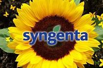 Семена подсолнечника сингента (Syngenta)