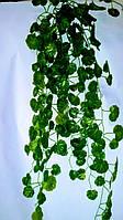 Свисающая зелень калач