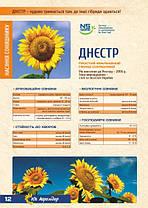 Семена подсолнечника Днестр Агролидер, фото 3