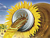Семена подсолнечника НК Брио (Syngenta) Круизер